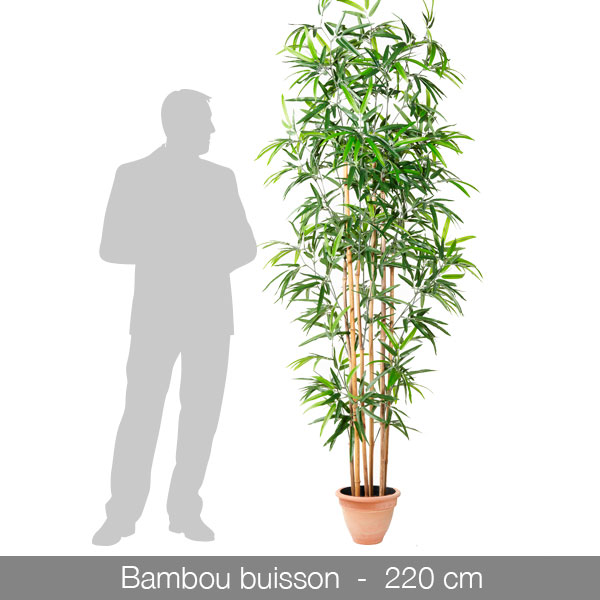 bambou-buisson